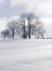 Baumgruppe auf einer Anhöhe im Winter